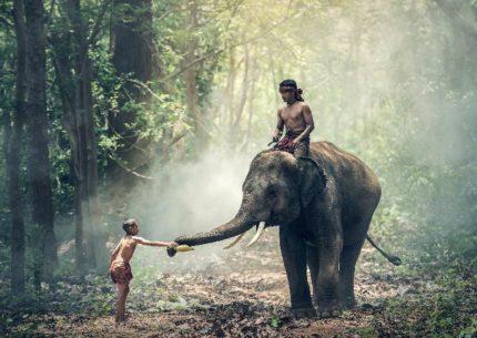 anteprima Tour India DGTRAVEL elephant