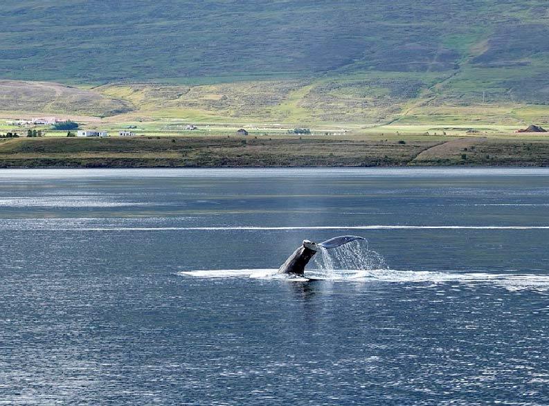 Tour Islanda 7-01