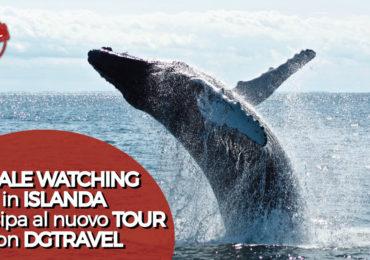 Whale Watching In Islanda DGTRAVEL